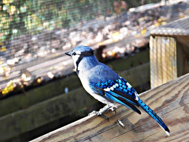 Het Vogelreservaat van Ohio in Mansfield, Ohio royalty-vrije stock afbeelding