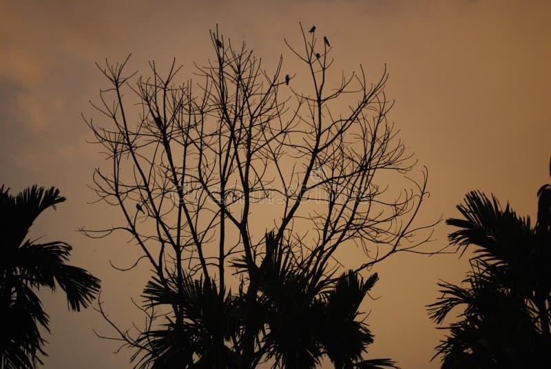 Het vogelshuis in de boom stock foto's