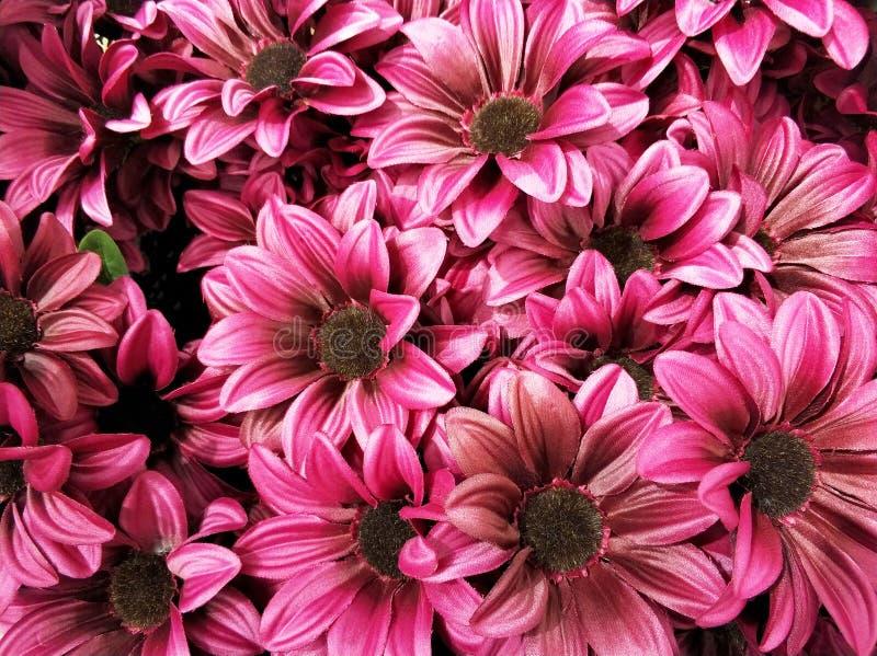 Het volledige madeliefje van de kaderlente bloeit achtergrond stock afbeeldingen