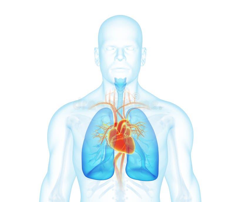 Het vooraanzicht van de röntgenstraalmens over witte achtergrond stock illustratie