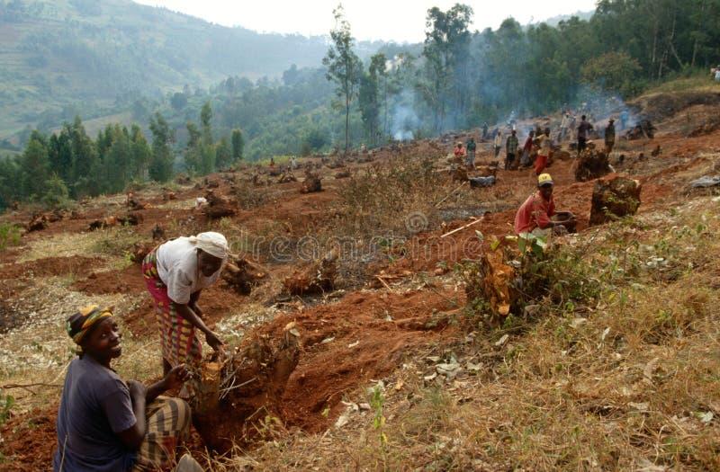 Het voorbereiden van het land voor landbouw, Oeganda stock fotografie
