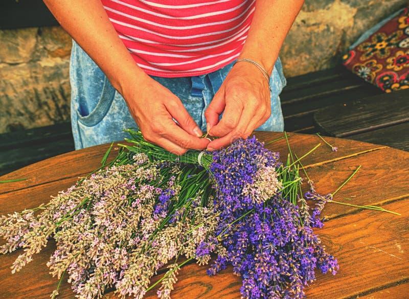 Het voorbereiden van verse besnoeiings levander stelen voor het drogen Aromatherapy stock afbeeldingen