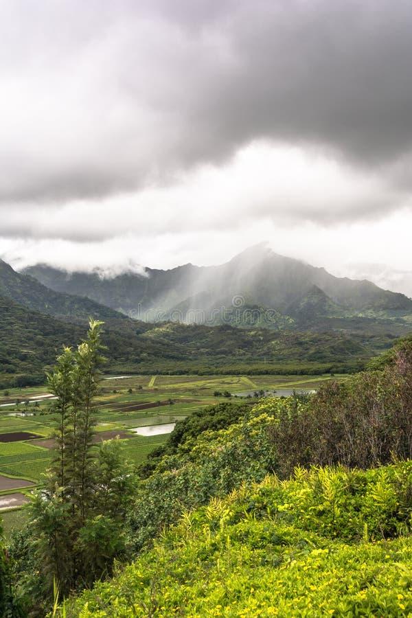 Het Vooruitzicht van de Hanaleivallei in Kauai, Hawaï stock afbeeldingen