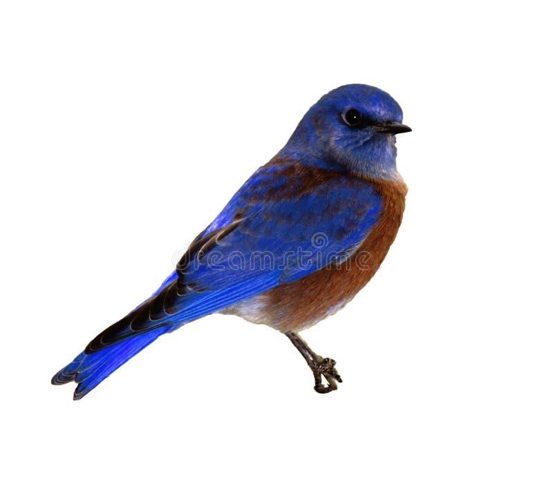 Het Voorwerp van de foto - Vogel stock foto