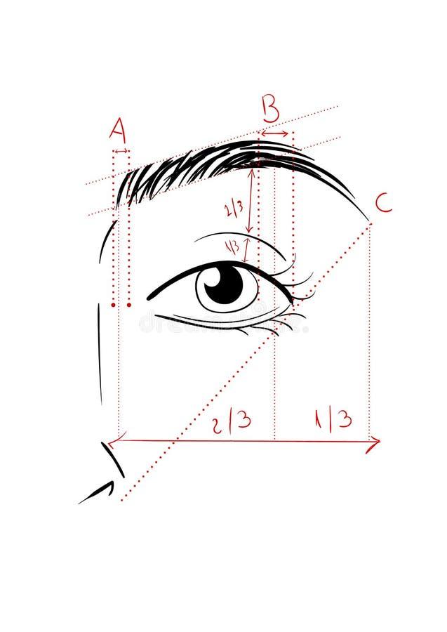 Het vormen van de Wenkbrauwen vector illustratie