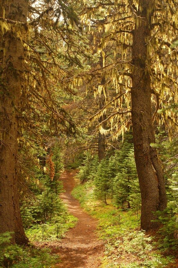 Het vreedzame Bos van het Noordwesten royalty-vrije stock fotografie