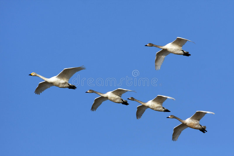 Het vrije vliegen stock fotografie