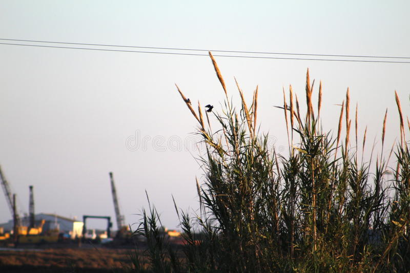 Het vrije Vogels Vliegen stock afbeelding