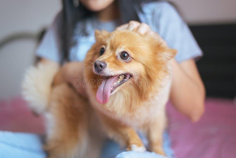 Het vrolijke Aziatische jonge tienermeisje spelen en gelukkige pret met haar hond thuis royalty-vrije stock fotografie