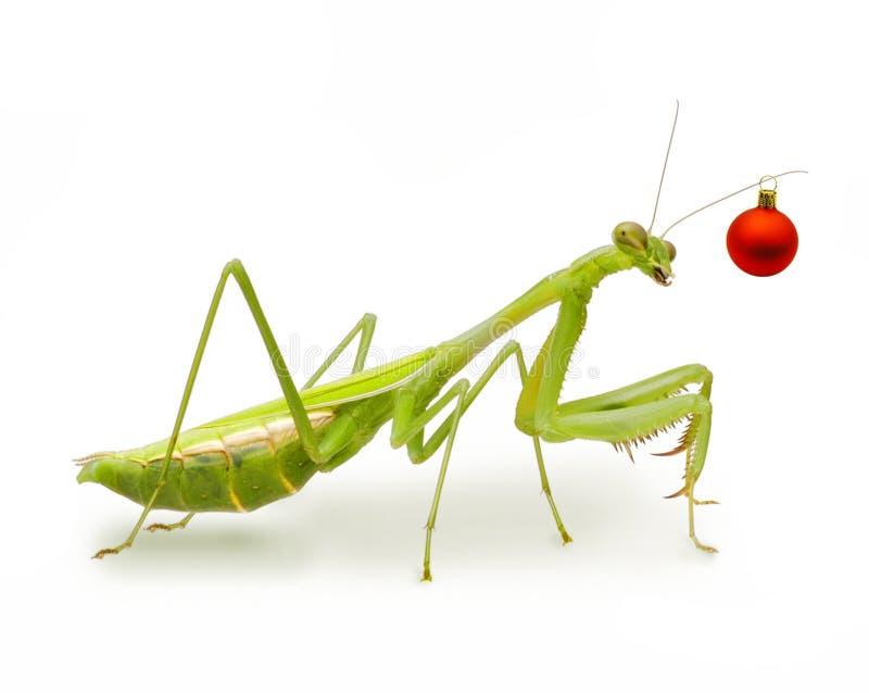 Het vrolijke Insect van Kerstmis royalty-vrije stock afbeelding