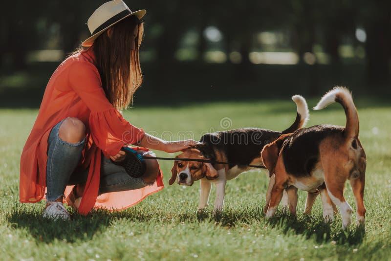 Het vrolijke meisje zit met twee honden in park stock foto's