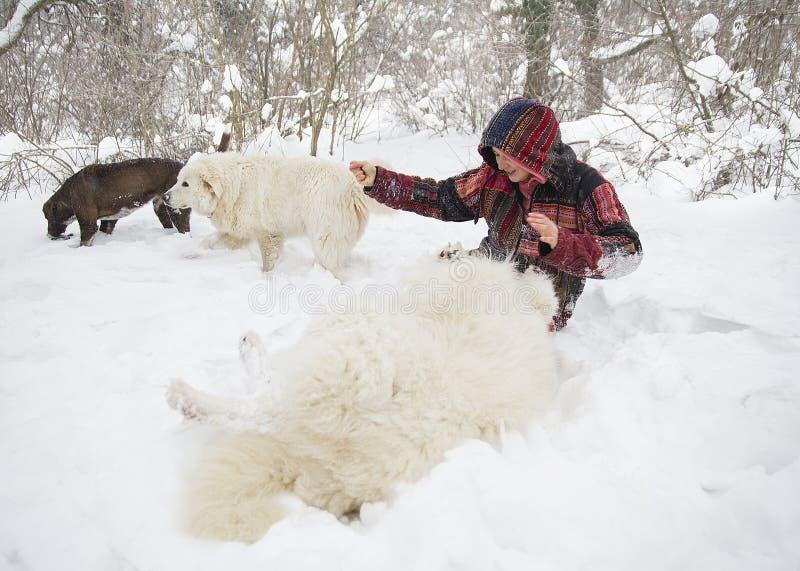 Het vrolijke vrouw spelen met honden in de sneeuw royalty-vrije stock afbeelding