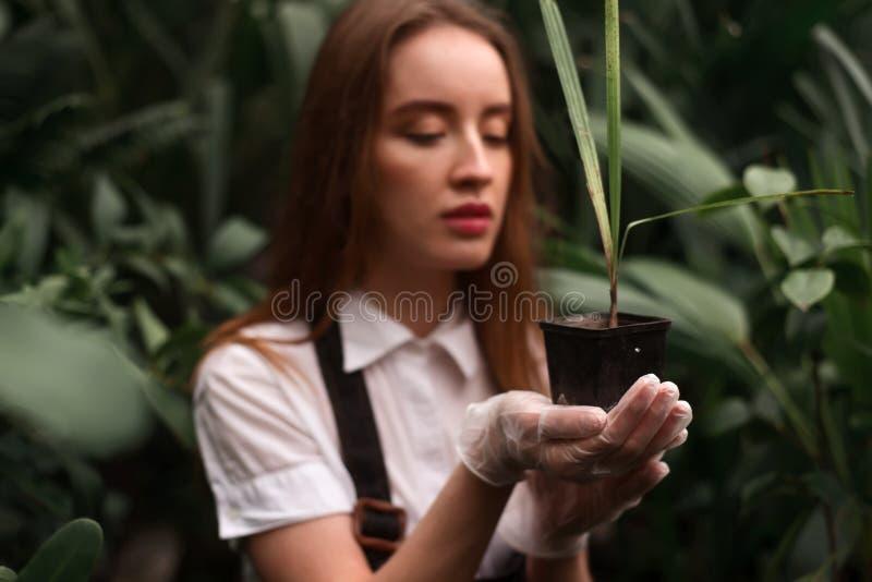 Het vrouwelijke bloemistwerk met houseplant in pot stock foto's