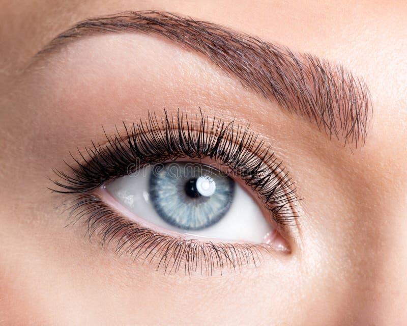 Het vrouwelijke oog van de schoonheid met krul lange valse wimpers stock afbeelding