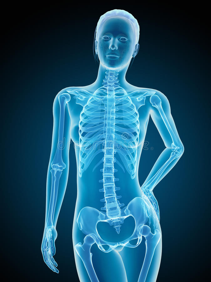 Het vrouwelijke skelet vector illustratie