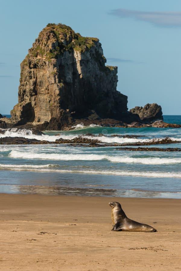 Het vrouwelijke zeeleeuw rusten royalty-vrije stock afbeeldingen