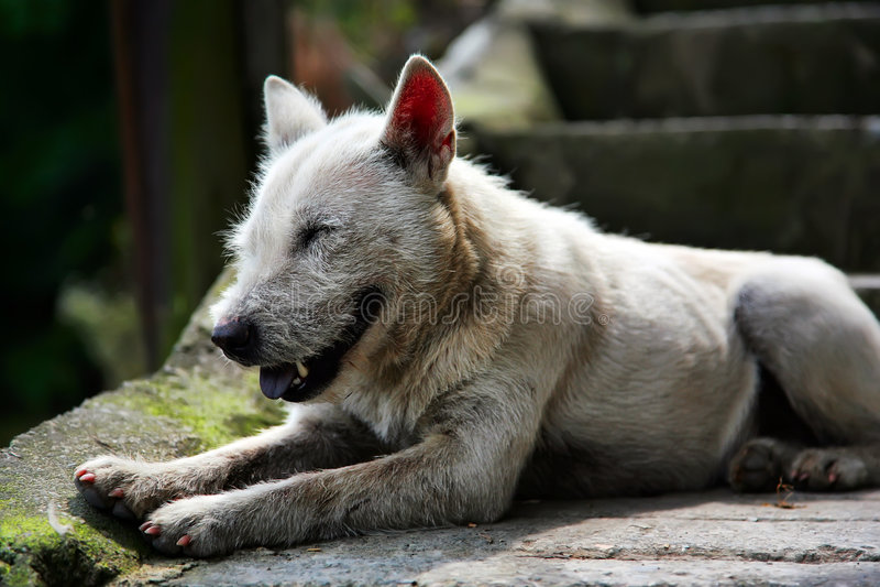 Het vuile hond glimlachen royalty-vrije stock fotografie