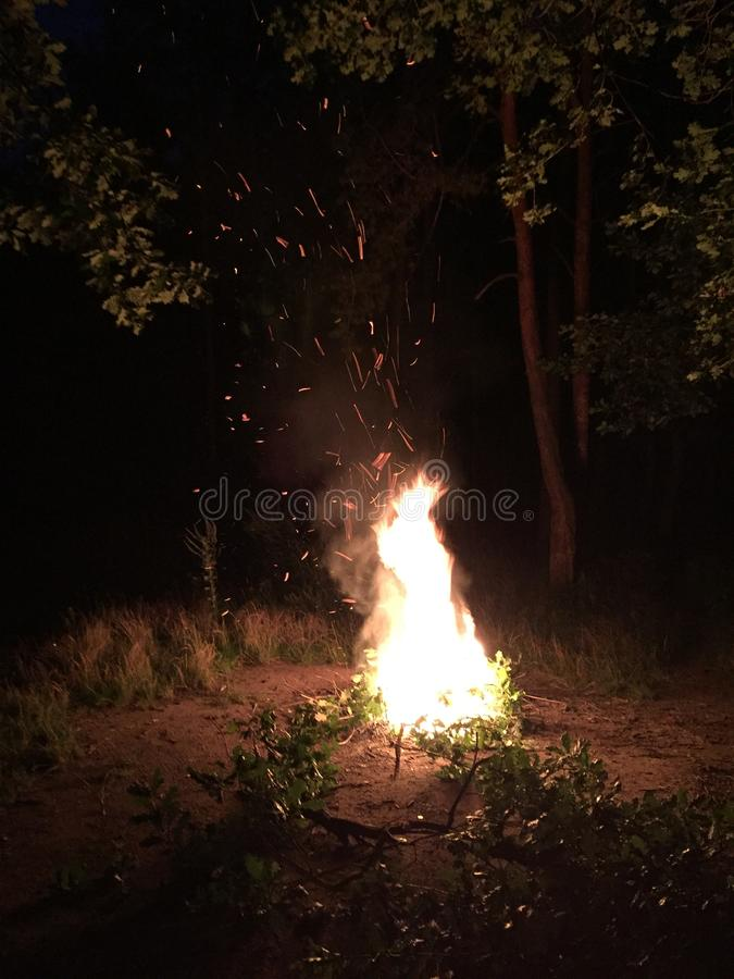 Het vuurwerk explodeert in brand in Bos royalty-vrije stock fotografie