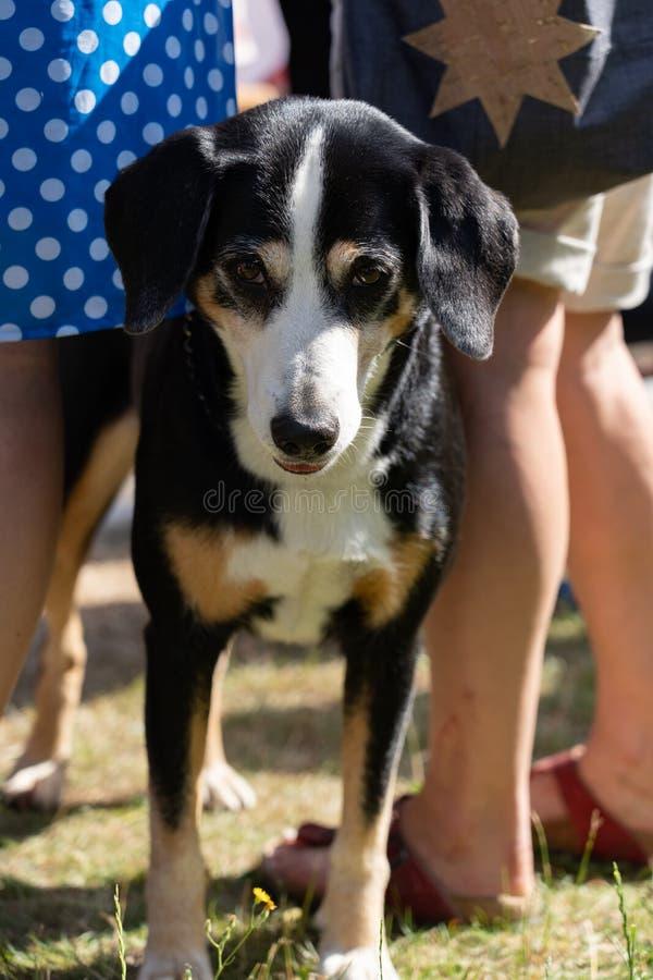 Het wachten hond tussen bevindende mensen in Jugendfest Brugg stock fotografie