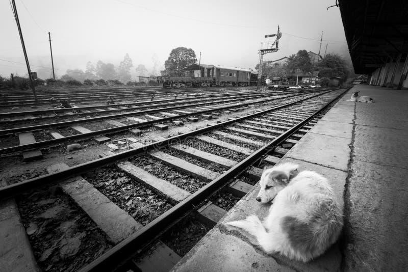 Het wachten op de trein Eenzaamheid van de post stock afbeeldingen