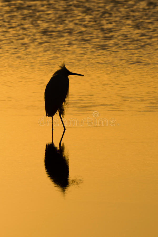 Het waden van vogel bij zonsondergang stock foto's