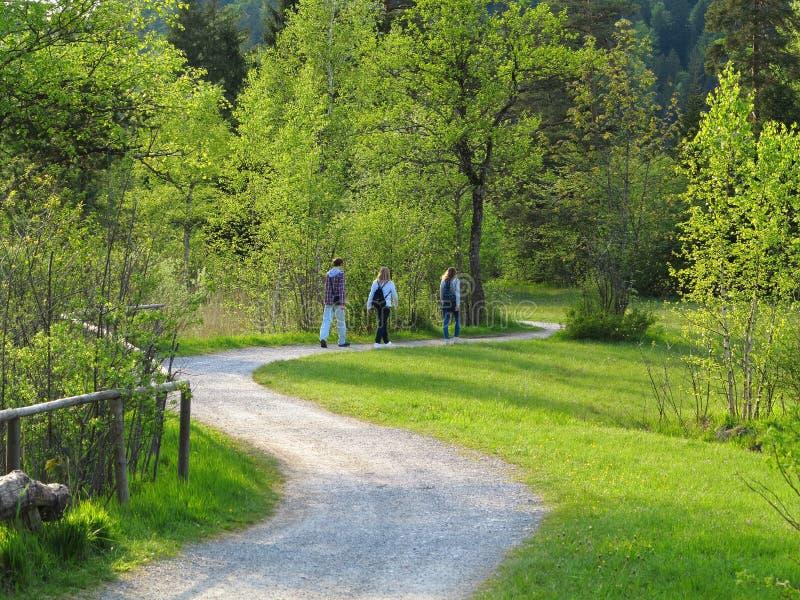Het wandelen door de aard bij de lente stock afbeelding