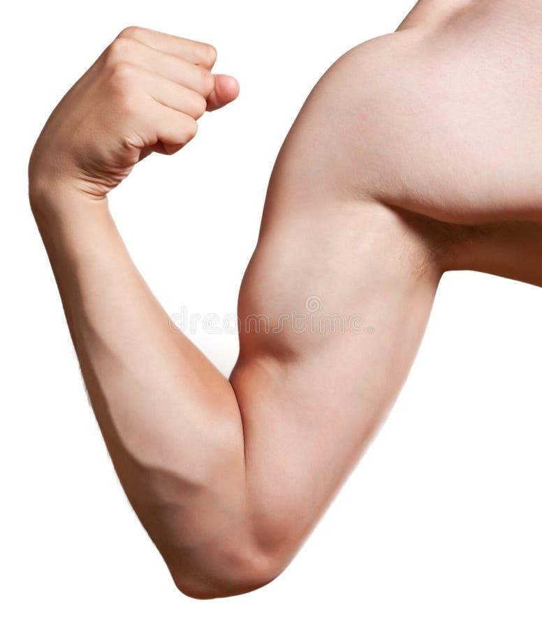Het wapen van de bodybuilder dat op wit wordt geïsoleerdw stock afbeeldingen