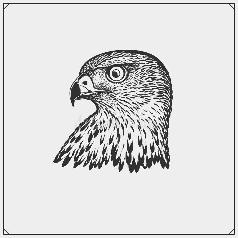 Het wapenschild van de havikswapenkunde Etiketten, emblemen en ontwerpelementen voor sportclub Drukontwerp voor t-shirts Vector i stock illustratie