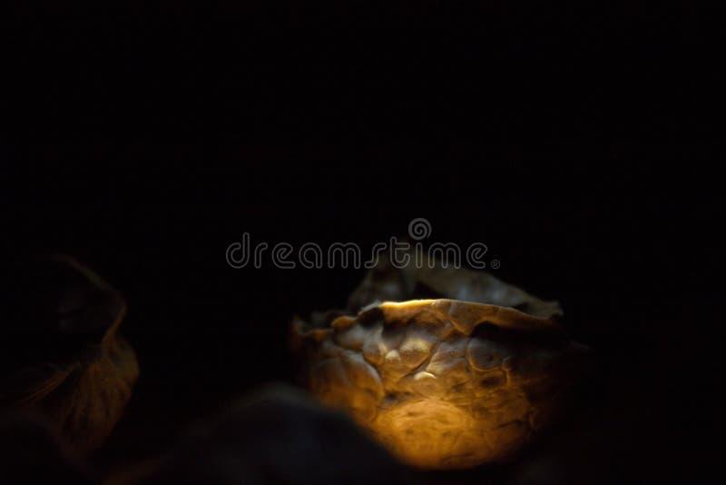 Het warme licht glanst op de helft van okkernootshell stock afbeelding