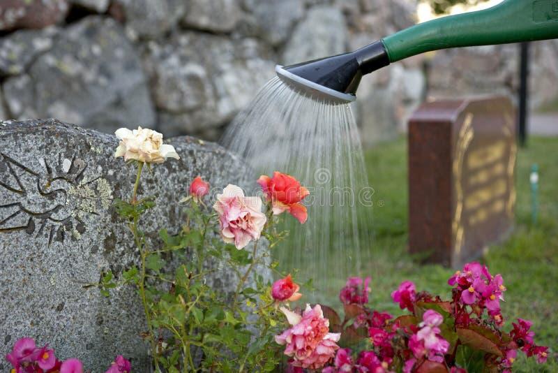 Het water geven van bloemen op graf royalty-vrije stock fotografie