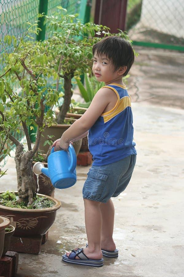 Het water geven van de jongen installatie stock foto