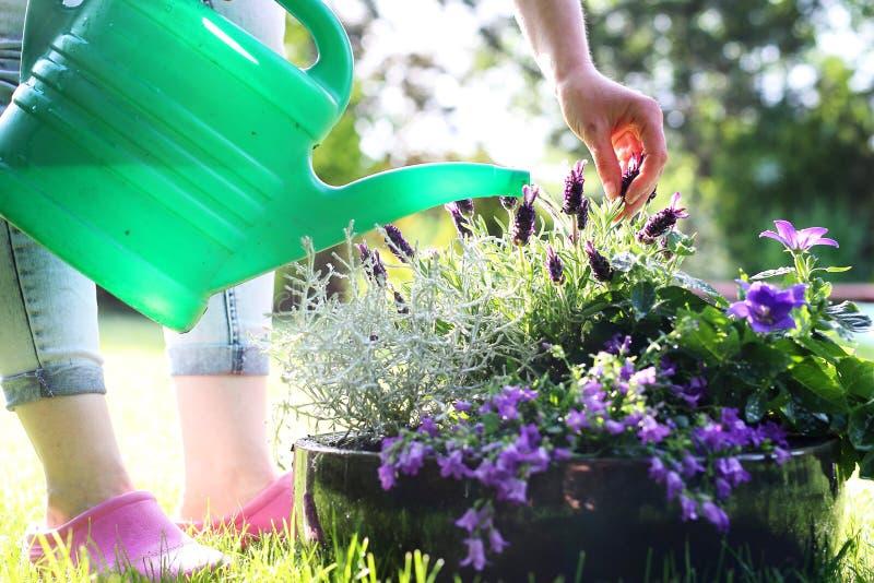 Het water geven van de tuin stock afbeeldingen