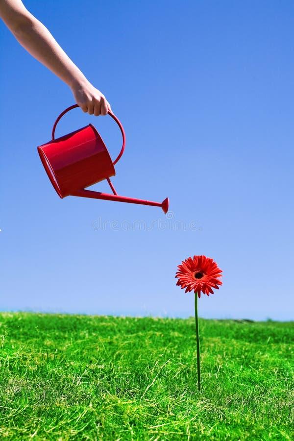 Het water geven van de vrouw bloem royalty-vrije stock afbeelding