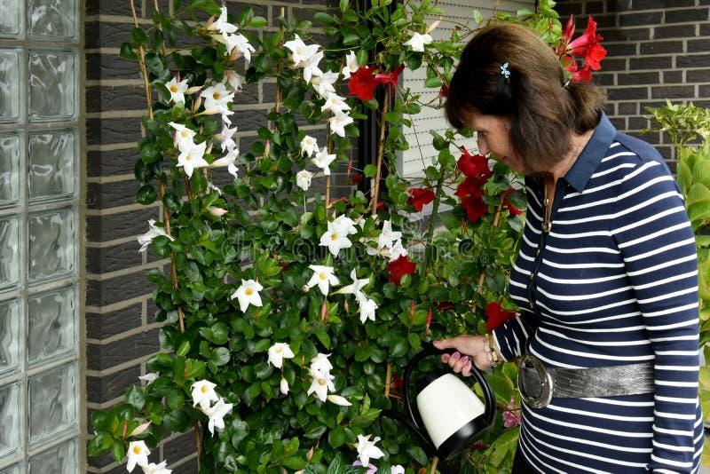 Het water geven van de vrouw bloemen royalty-vrije stock foto's