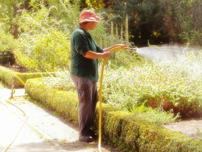 Het water geven van de vrouw bloemen stock fotografie