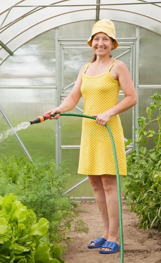 Het water geven van de vrouw groenten stock fotografie