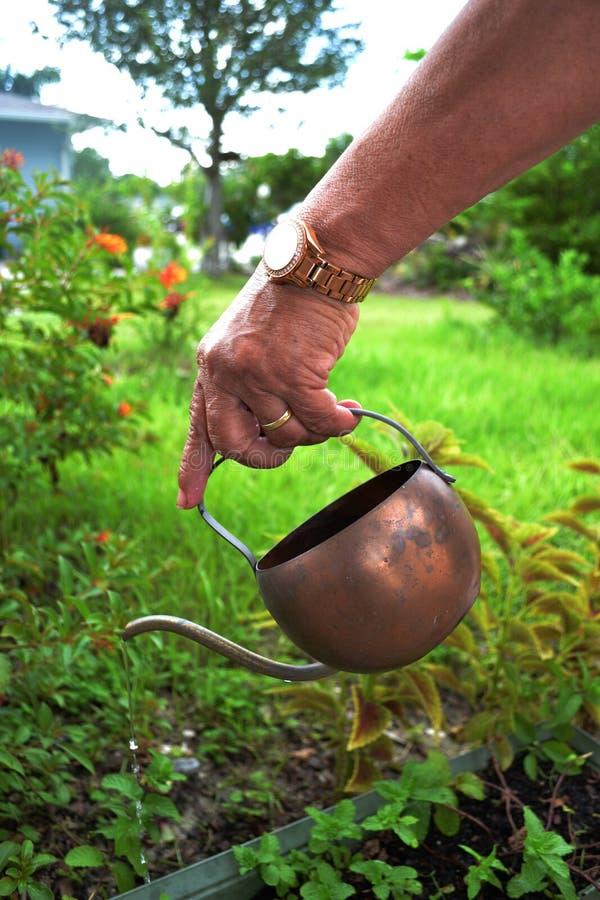 Het water geven van de vrouw installaties stock fotografie