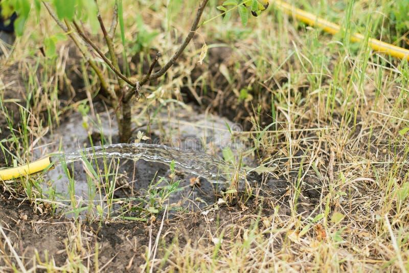 Het water geven van een kleine boom van een slang een landbouwer kweekt een tuin royalty-vrije stock afbeeldingen