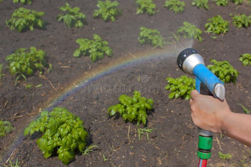 Het water geven van gewassen met een regenboog stock afbeeldingen
