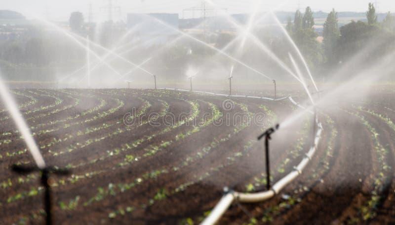 Het water geven van gewassen in West-Duitsland met Irrigatiesysteem die sproeiers op een gecultiveerd gebied met behulp van stock foto's