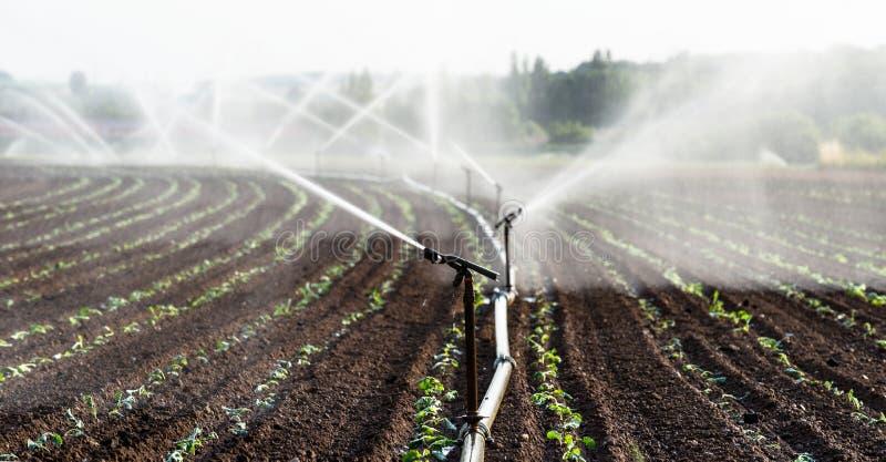 Het water geven van gewassen in West-Duitsland met Irrigatiesysteem die sproeiers op een gecultiveerd gebied met behulp van stock afbeeldingen
