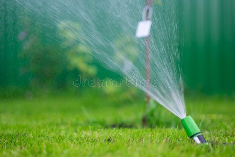Het water geven van het groene grasgazon met een spuitbus bij de zomerdag stock foto