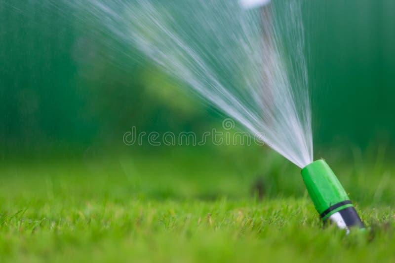 Het water geven van het groene grasgazon met een spuitbus bij de zomerdag royalty-vrije stock foto