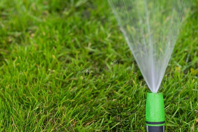 Het water geven van het groene grasgazon met een spuitbus bij de zomerdag stock afbeeldingen