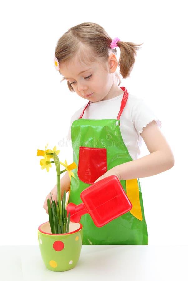 Het water geven van het meisje gele narcis stock afbeelding