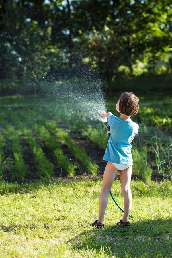 Het water geven in zon stock fotografie