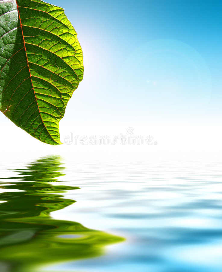 Het water van het blad