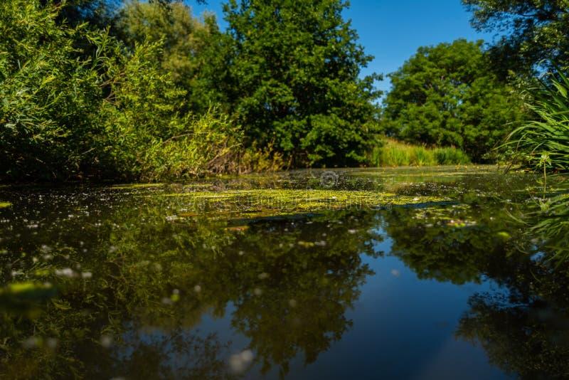Het water vindt altijd zijn weg door aard stock fotografie