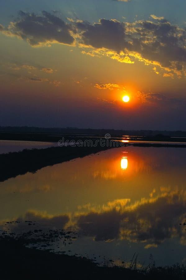 Het watermoeras van de zonsopgang stock foto's