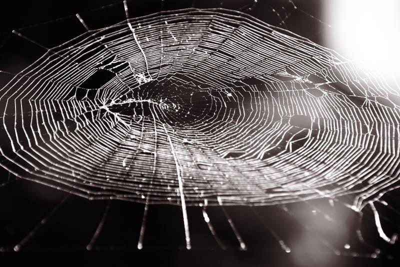 Het Web van spinnen. Sepia stock afbeeldingen